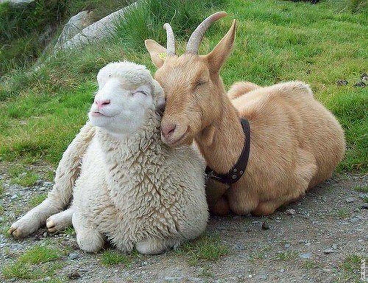 Секс с авцой 27 фотография